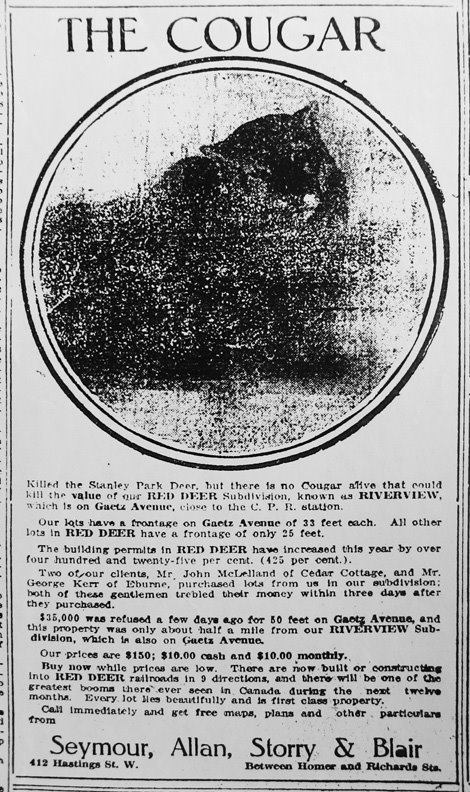 """Killed the Stanley Park Deer, but there is no Cougar alive that could kill the value of our RED DEER Subdivision."" <em>Province</em>, 28 October 1911"